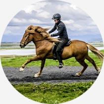 Reiter und Islandpferd