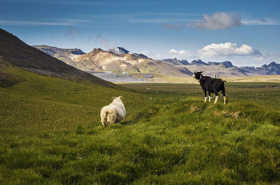 Island Exkursion im Herbst: Reykjanes