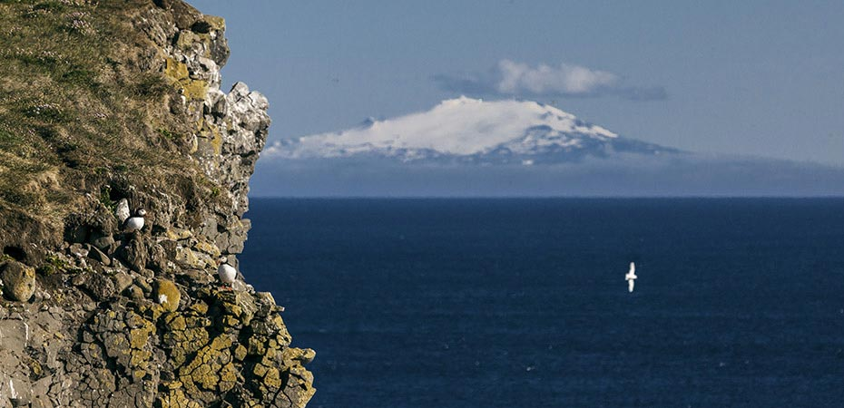 Blick von Látrabjarg zum Snæfellsjökull