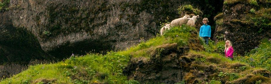 Islandreisen für Tierfreunde individuell