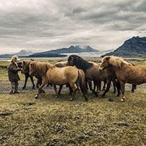 Islandreisen: Islandpferde