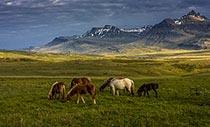 """Breiðdalur: das """"breite Tal"""" im Osten"""