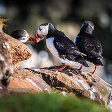 Islandreisen für Tierfreunde