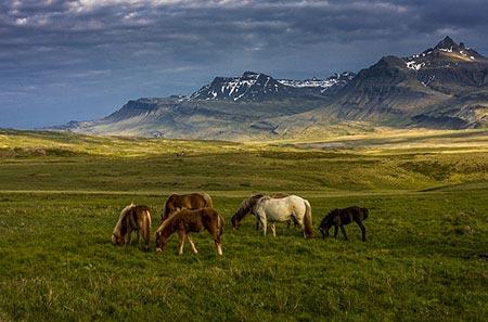 Islandpferde im Breiddalur