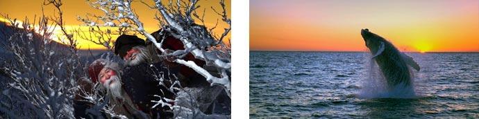 Weihnachtskerle und springender Buckelwal
