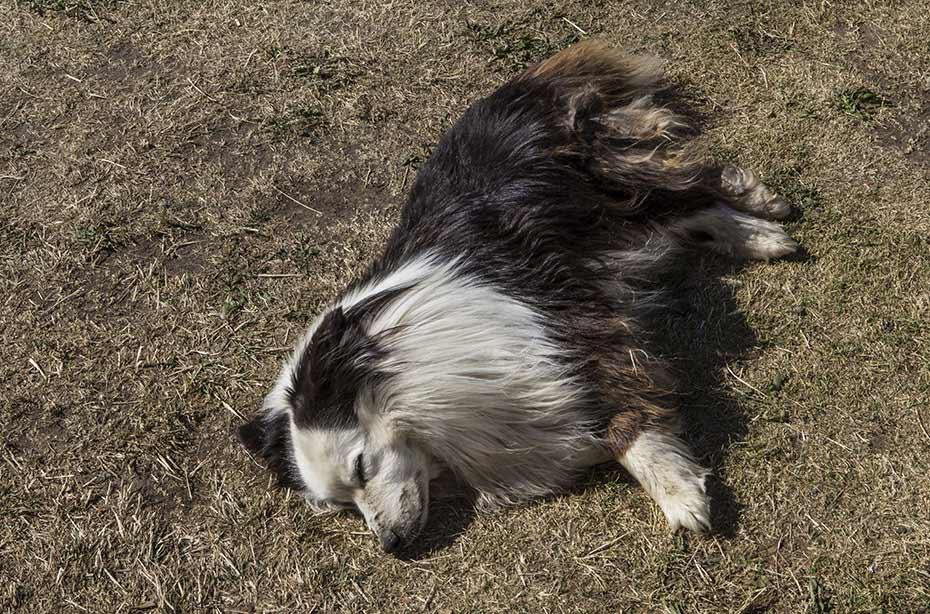 Reiten im Mittsommer: Hofhund