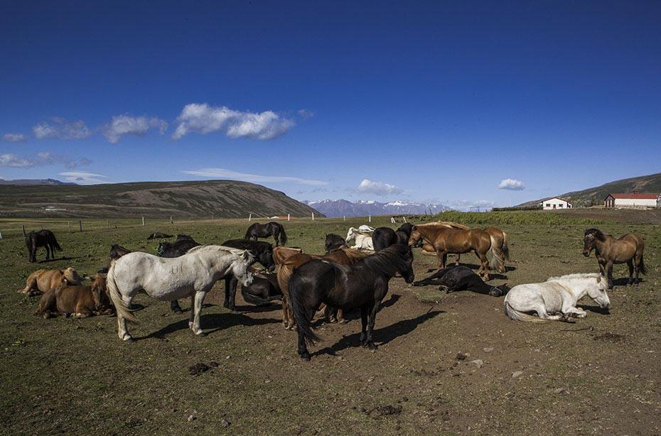 Reiten im Mittsommer: Islandpferde
