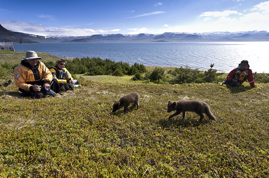 Outdoor-Abenteuer Westfjorde: Polarfüchse