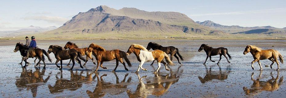 Pferde und Reiter am Strand der Halbinsel Snæfellsnes