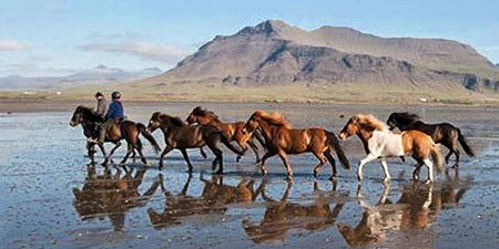Islandpferde und Reiter auf der Halbinsel Snæfellsnes